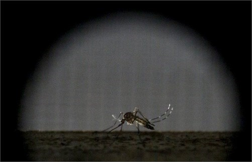 Máy phát hiện muỗi từ xa 2km